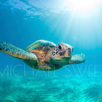 Fine Art Photography on Metal by Artist Michael Sweet