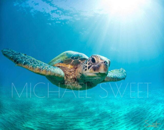 Fine Art Photography on Metal by Artist Michael Sweet